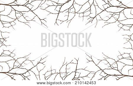Dry twig with two old leaves isolated on white background. Autumn concept.