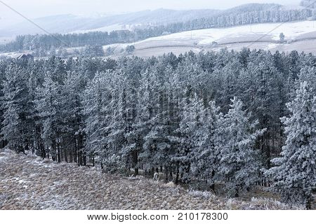 Winter view with snow trees and stones background