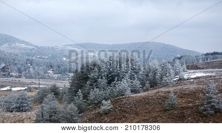 trees covered by white snow on mountain hill. nature winter background