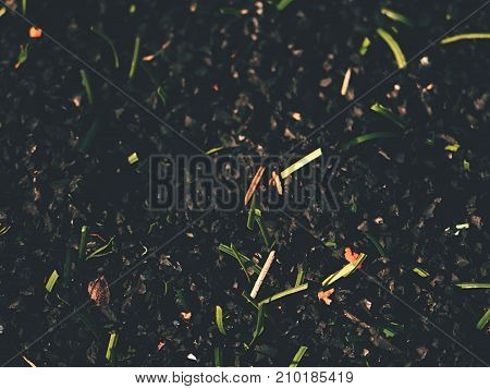 Raw Rubber Of  Plastic Grass On Artificial Football Turf. Close Up Of Checking The Rubber Pieces For