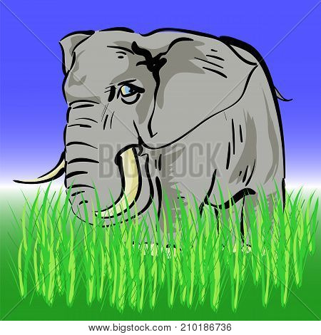 Grey African Elephant on Grey Grass Background