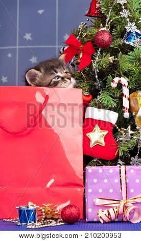 Cute fluffy kitten near Christmas spruce with gifts and toys