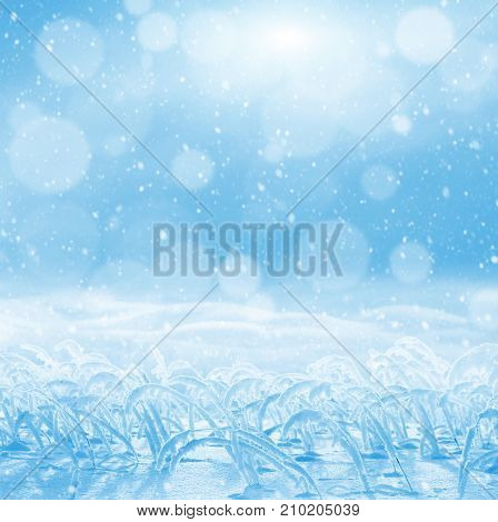 Winter bright background. Background for design with snowdrifts and snow-covered reeds