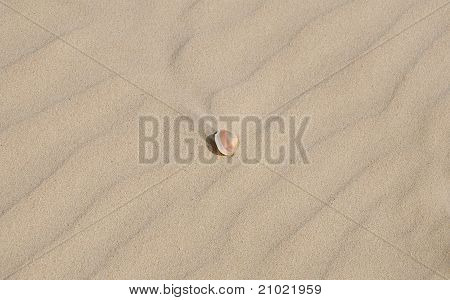 Little Sea Shell  On Light Sand Texture With Diagonal Pattern
