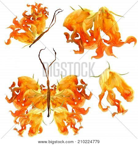 Floral Butterfly Made From Bizarre Curved Extruded Fried Zucchini Flowers Isolated