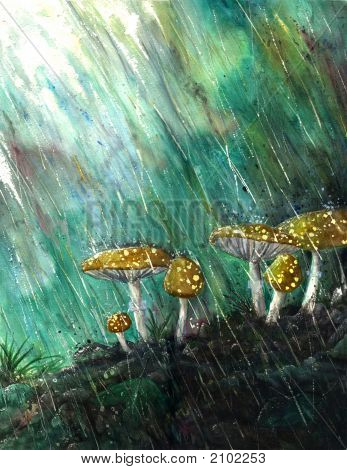 Mushrooms In The Rain