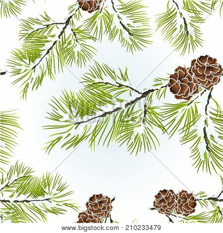 Seamless texture conifer Branch Pine with pine cones winter snowy natural background vector illustration editable hand draw