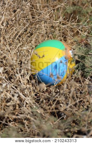 child's ball lost in a dry bush
