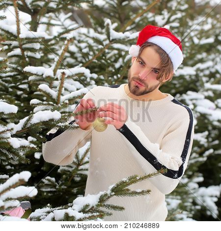 Macho In Santa Hat Decorating Fir Tree In Snow Forest