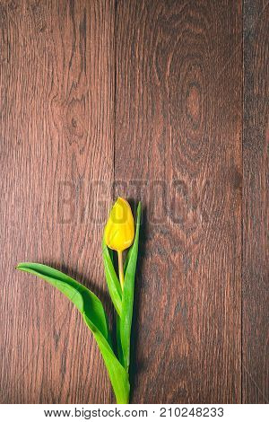 on a dark wooden floor there is a bright yellow tulip