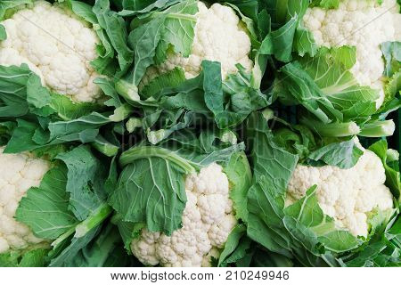 Background of six cauliflower lined up with selective focus and space for text.