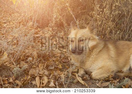 Dog is chilling dog is having a sunbath