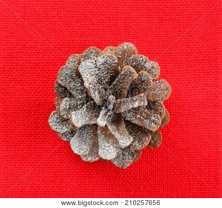 Snow dusted pine cone on red background shot from overhead in square format