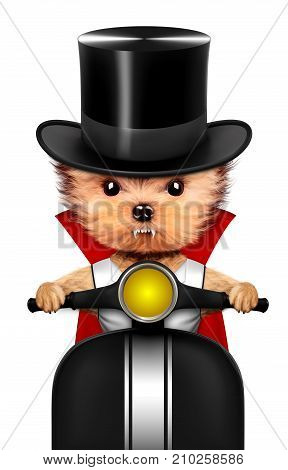 Funny cartoon animal Dracula sit in black bike. Halloween and Dead day concept. Realistic 3D illustration.