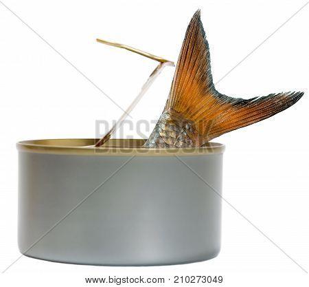 Fish Christmas Carp In Tin Can