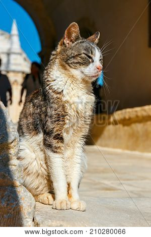 Cat Sits On The Ground In A Summer Day
