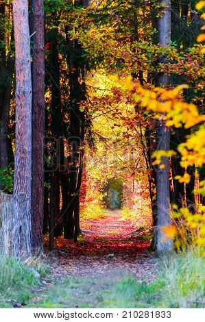 The Path In The Forest In The Autumn. Many Vibrant Colors, Beautiful Trees And Leaves On The Ground