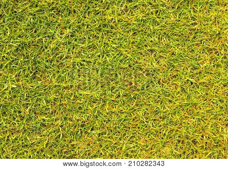 green grass texture. For design View from the top