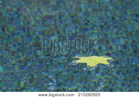 Single Maple Leaf Floats in Pool with Blue Turquoise and Purple Textured Bottom