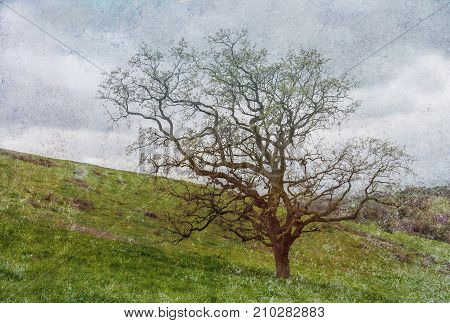 Lone Oak Tree on Hillside with Colorful Speckled Texture Abstract
