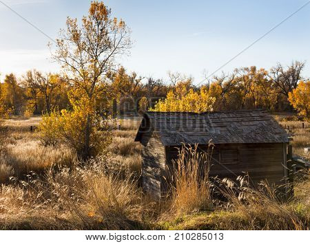 A rundown wooden homestead building set in a field with tall dried grass deciduous trees with fall foliage and light blue cloudless sky.