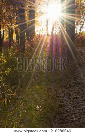 Colorful sunrays through deciduous tress that illuminate tall green grass and fallen leaves on the forest floor.