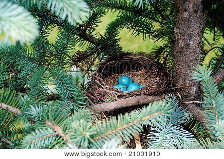 Brilliant Blue Robin Eggs