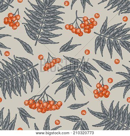 Engraving autumn rowanberry seamless pattern. Vintage seasonal decor.