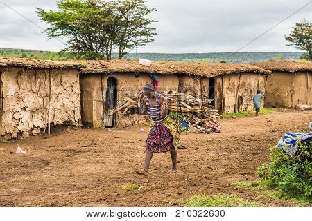 MASAI MARA, KENYA - OCTOBER 17, 2014: African woman from Masai tribe carrying a bunch of wood in her village. The Maasai are a Nilotic ethnic group living in southern Kenya and northern Tanzania.