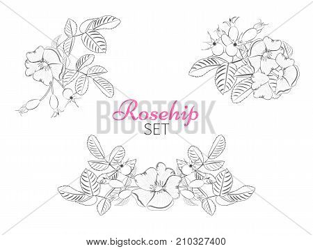 Set of arrangements bouquet of wild rose with berries.Label with rosehip isolated.Vector illustration.
