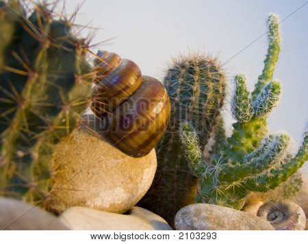 A Cockle Shell Is In The Desert