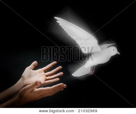 Two hands on a black background releasing a luminous dove into flight poster