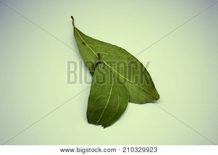 two bay leafs isolated on withe background