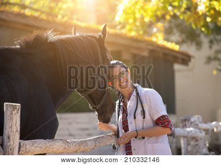 Veterinarian With Horse On Farm