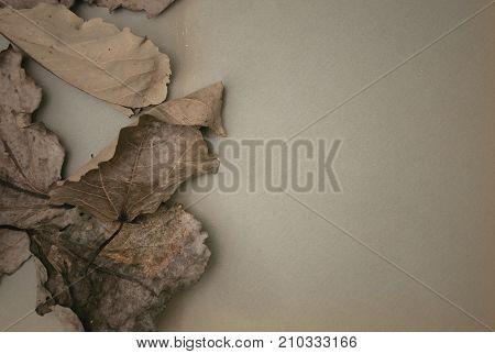 Blank vintage photo album paper page in autumn fallen arid oak leaves background. Photo frame design.