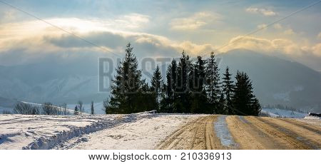 Road Through Spruce Forest In High Mountains