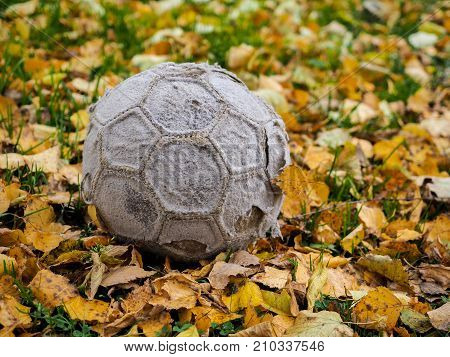 Old tattered soccer ball in the yellow autumn leaves