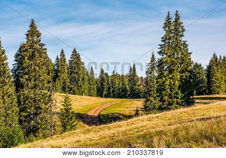 Dirt Road In Spruce Forest At Sunrise