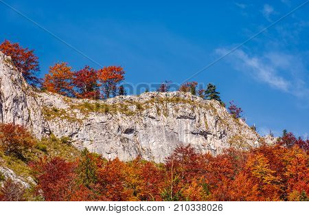 Forest In Red Foliage On A Rocky Cliff