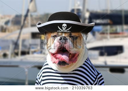 Portrait of American Bulldog dressed in a pirate clothing with tongue hanging out on the background of sea yacht