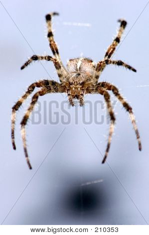 Spider On Blue Background
