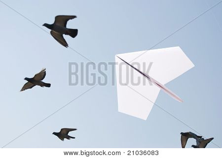 Paper Airplane Flying With Birds