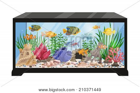 Aquarium tank cartoon vector illustration with swimming exotic freshwater fishes seashells seaweeds  equipment and accessories