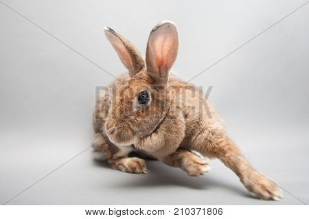 Fast Running Bunny Rabbit On A Seamless Light Background