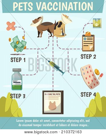Pets compulsory vaccination orthogonal flowchart poster with 4 steps preventive care for optimal animals protection vector illustration