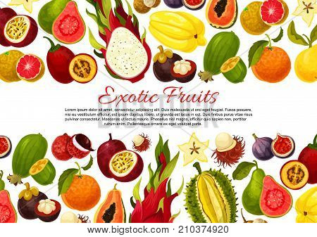 Exotic fruits poster or banner template of tropic fruit harvest. Vector tropical papaya, passion fruit maracuya or figs and durian, farm juicy lychee or organic pitahaya and carambola or guava