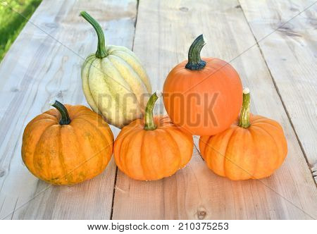 Pumpkins and squashes on wooden background. Outdoor shot