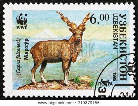 UZBEKISTAN - CIRCA 1995: a stamp printed in Uzbekistan shows Markhor Capra Falconeri Screw Horn Goat Wildlife circa 1995