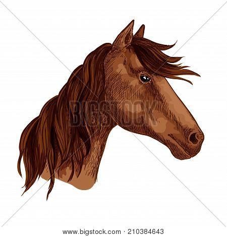 Horse or racehorse animal head with waving mane. Brown mustang muzzle of wild or domestic stallion or mare for equine sport or equestrian races contest or team mascot. Vector isolated sketch icon