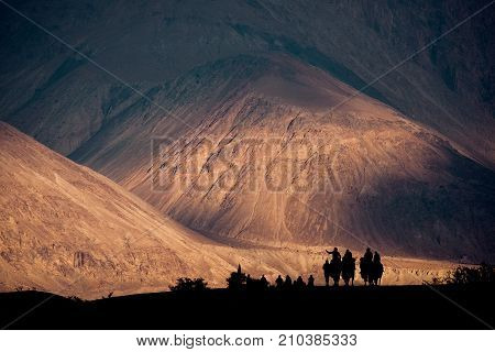Silhouette image of camels caravan in the Hunder desert Nubra valley India